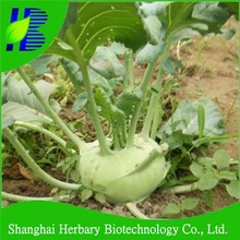 High yield hybrid F1 Kohlrabi Seeds for sowing