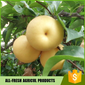 Chinese Fresh Pear Hosui Pear/ Fengshui Pear
