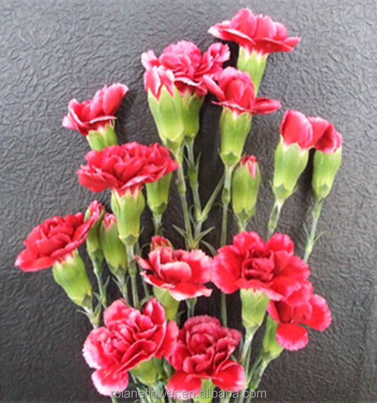 Decoration real touch spray carnation beautiful flowers florist supplies