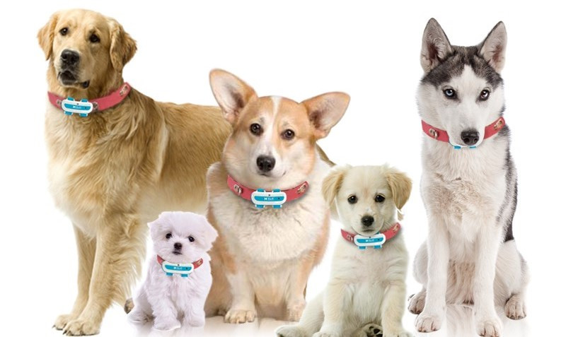 dog pet products for dogs leashes / dog training device