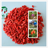 natural goji berries,barbary wolfberry fruit Goji Berry Extract organic goji berries medlar