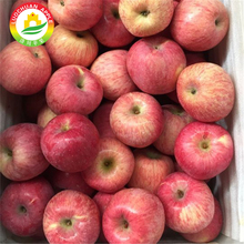 The crunchy Fuji Apple Luochuan apples chinese fruit apple