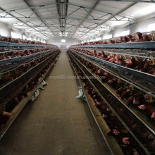 Chinese factory sale chicken coops for layer chicken