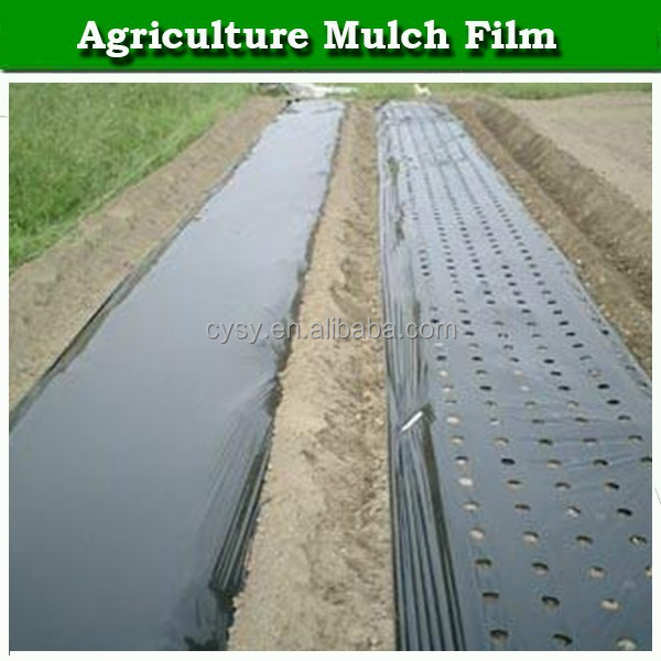 anti weed and keep warm mulch film for garlic tomato corn chili strawberry fruit trees