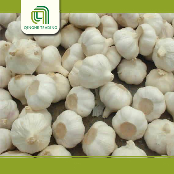 New design garlic buyers in dubai with low price