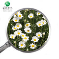 ISO Certified Factory Supply Pyrethrum Extract 25% Pyrethrin In Biological Pesticide