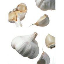 China dry garlic price