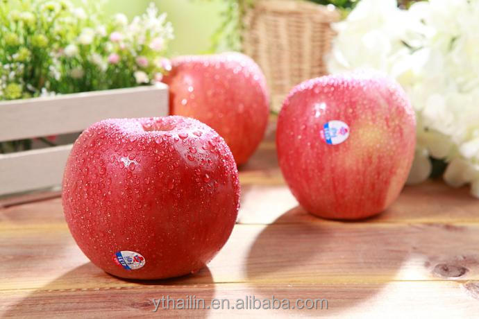 yantai apple fresh Fuji apple good price export
