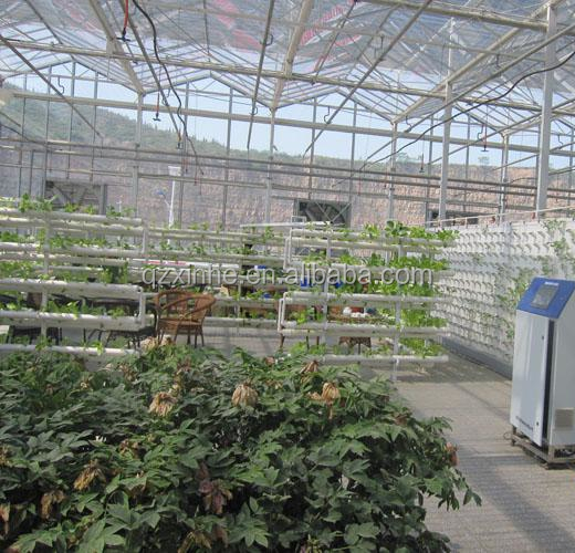 Tomato Greenhouses Structure with Hydroponic System