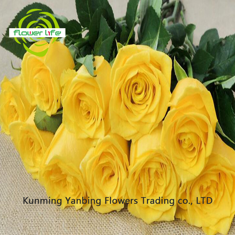 Cheap Wholesale Hot Sale Fresh Cut Yellow Rose Golden Gate For Christmas Gift Fire Yellow Spray Rose Golden Gate