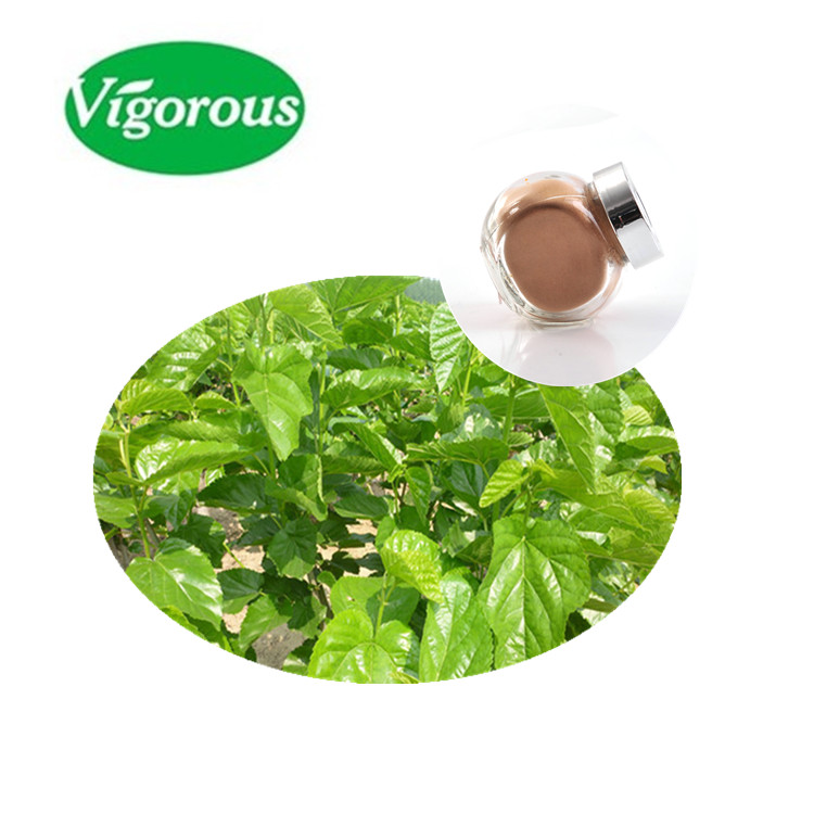 High quality natural plant extract 4:1;12:1 mulberry leaf powder / Morus alba L.