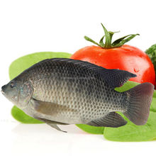 Whole round frozen tilapia fish for sale