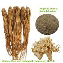 100% Natural plant extract Angelica Root Extract powder