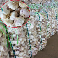 chinese garlic 2012 price