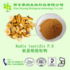 Natrual Herb of High Quality 100% Natural Radix isatidis P.E/Indigowoad Root Extract