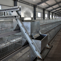 Automatic poultry farm equipment design layer quail cages for sale