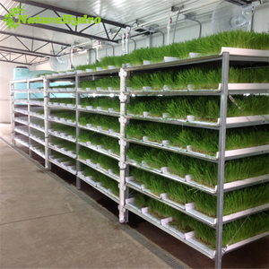 Commercial animal fodder tray hydroponic fodder growing system