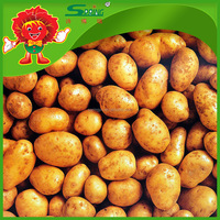 Round shape russet potatoes for sale