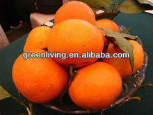 nutritious navel orange for sale