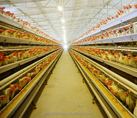 2017 Promotion Fast Delivery Layer Chicken Cages With Auto Water System