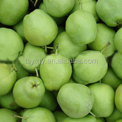 Fresh early su pear juicy su pear with best price for export