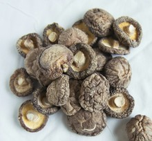 Hot Selling Magic Mushrooms Dried for Sale Dried Shiitake Mushrooms