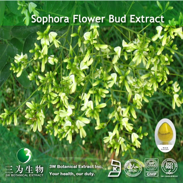 Kosher&Halal Sophora Japonica Rutoside Supplied By 3W GMP Factory
