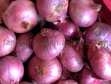 new crop onions