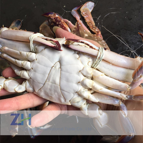 Best quality frozen whole round swimming male crab with nice price
