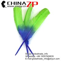 Alibaba ZPDECOR Natural Feather Dyed Blue Green Ombre Bicolourable Turkey Feathers for Party Decoration