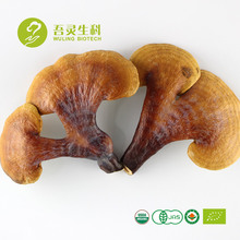 100% Naturel Organique Reishi Champignon Ganoderma lucidum fruits corps