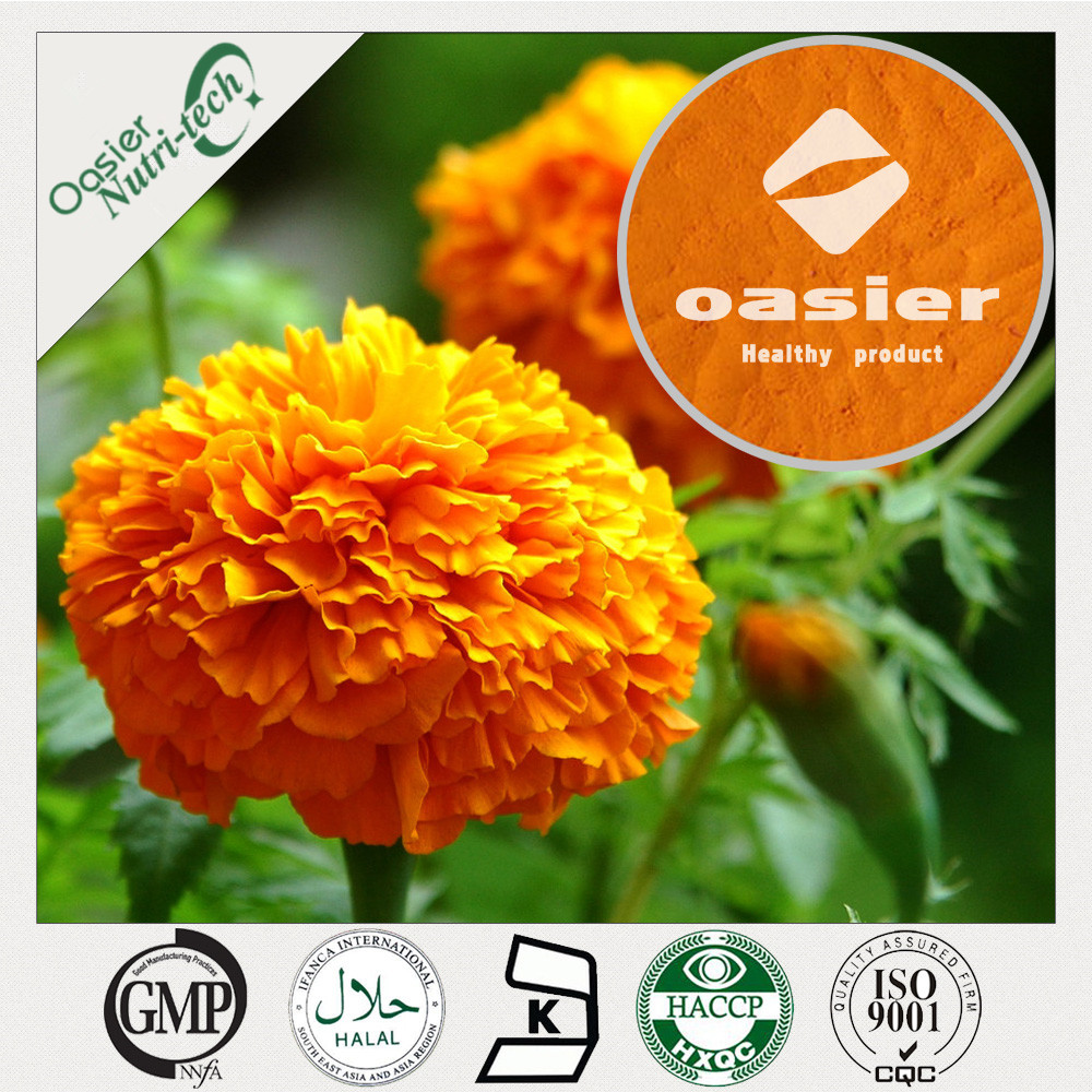 Natural marigold marigold extract for chickens 2% lutein