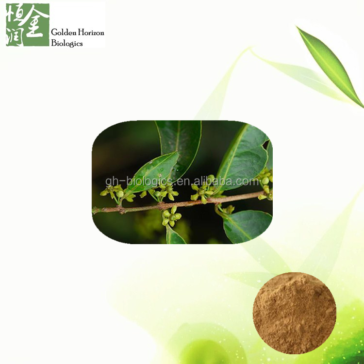 100% natural plant extract Salacia Oblonga Extract 20%