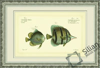 Bloch Antique Fish II Wall Picture