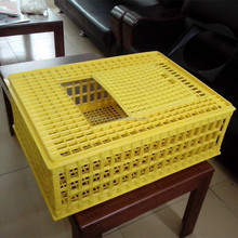 wholesale chicken crates plastic poultry / duck transport box with yellow color
