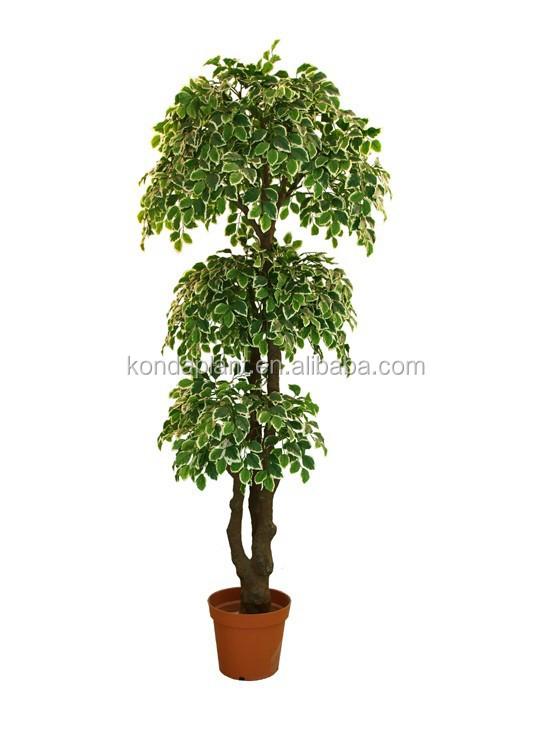 Gros pas cher artificielle plantes et arbres ficus bonsai - Bonsai arbre prix ...