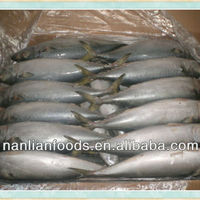 Fresh Seafood For Mackerel 300 500g