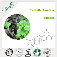 Centella Asiatica/ Gotu Kola Extract 10~80% Total Triterpenes (Asiaticoside+Madecassoside)