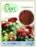 lingonberry extract powder(10-25% Anthocyanins)