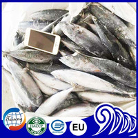Best Price Frozen Whole Round Bonito Fish With Size 750g+