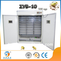 DIY machine parrots and parrot eggs for sale egg plastic basket cheapest shipping cost ZYB-10