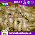 Fresh Ginger Wholesale for EU market with 13.6kg/pvc box
