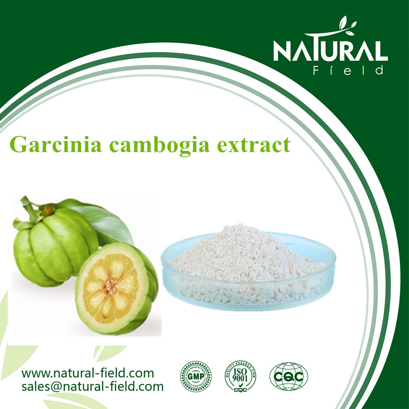 Lose Weight Herbal Extract Garcinia Cambogia Powder 60% in Bulk