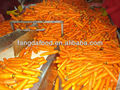 clean surface quality carrot