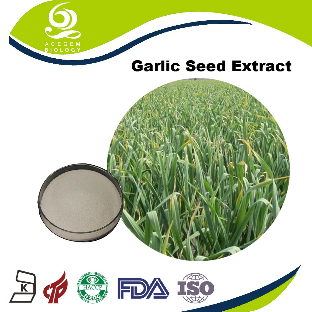 Best Manufacturers Supply Whole Sale Alibaba Lipid Garlic Extract Bulk
