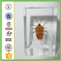 china factory ODM / OEM Creative acrylic resin insects