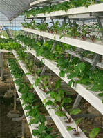 Agricultural Greenhouses for Soilless Hydroponics System