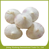 2016 new fresh white natural solo garlic
