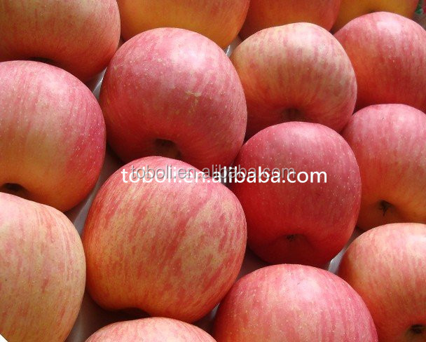 bulk fresh apple fruit