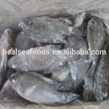 best selling products whole frozen tilapia
